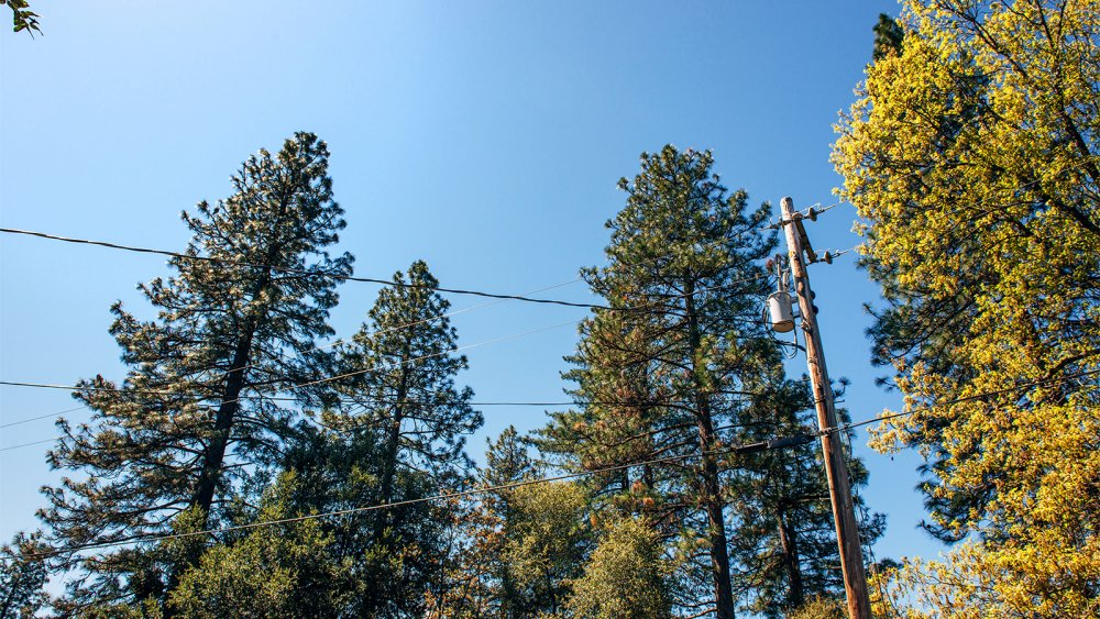 Utility Pole Among Trees